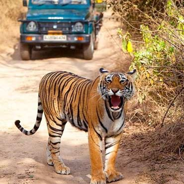Overnight Ranthambore Tour