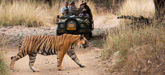 Jaipur Ranthambore Same Day Tour